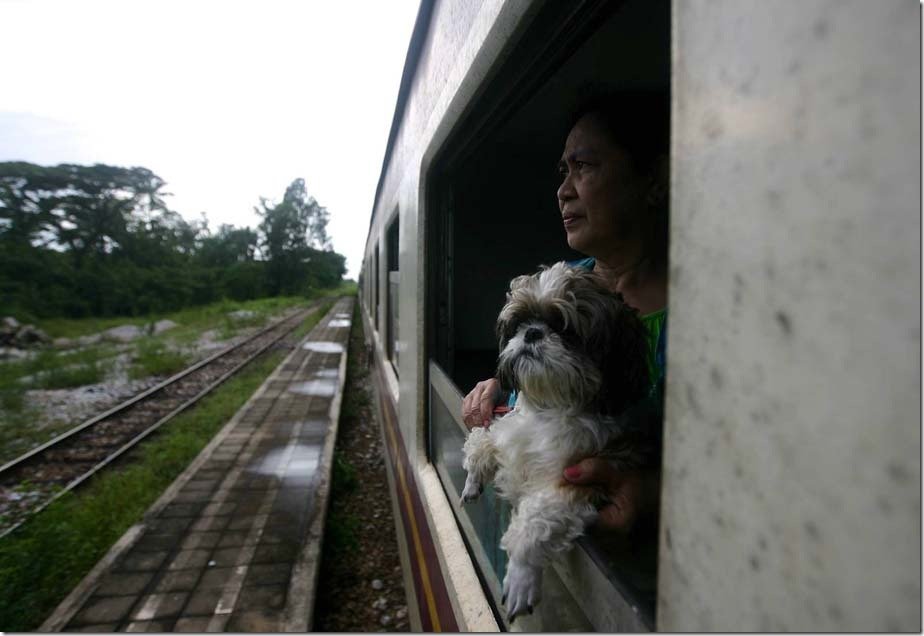 Kuala Lumpur, 16 December 2012. A passenger with the pets at the Train in the journey to Bangkok from Hat Yai, Long Journey from 16 to 18 December, 2012 start from KL Sentral to Bangkok city using the train take 31 hours and distance from Kuala Lumpur to Bangkok is 1472 km, we need to do two exchanges train from KL Sentral to Hat Yai Station takes about 13 hours at a distance of 532 km and from Hat Yai Station to Bangkok railway station with a distance of 941 km is equivalent to 18 hours of travel to Bangkok station. Bangkok is the capital and largest city in Thailand, located at the east bank of the Chao Phraya River and nearest to Thailand bay. Bangkok also one of the most popular tourist destinations in the world. Photo Syarafiq Abd Samad