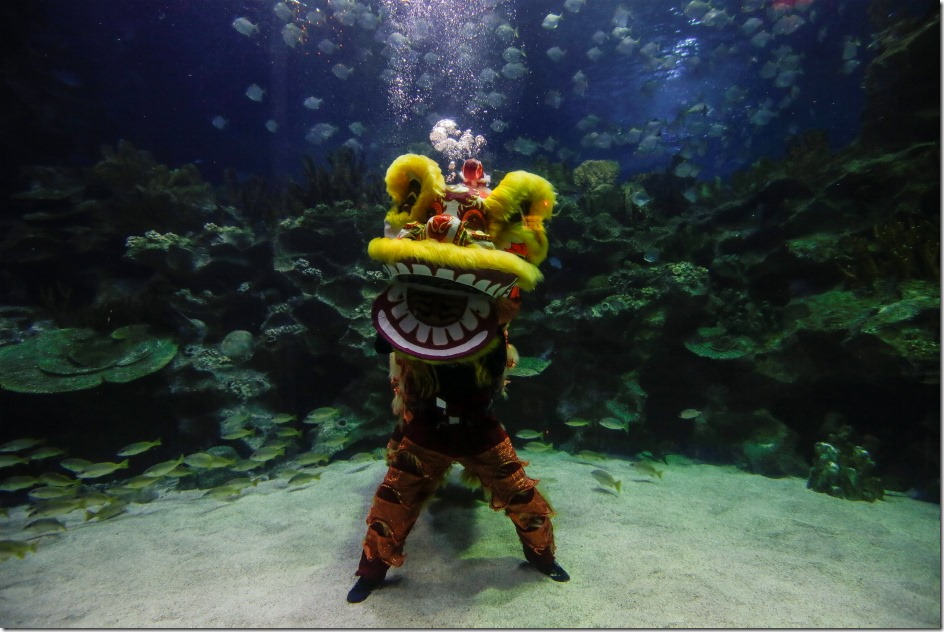 Malaysian divers perform a lion dance under water during Chinese New Year celebrations at Aquaria KLCC in Kuala Lumpur, Malaysia. Chinese around the world celebrate the Chinese New Year, Year of Monkey on 8th of February.
